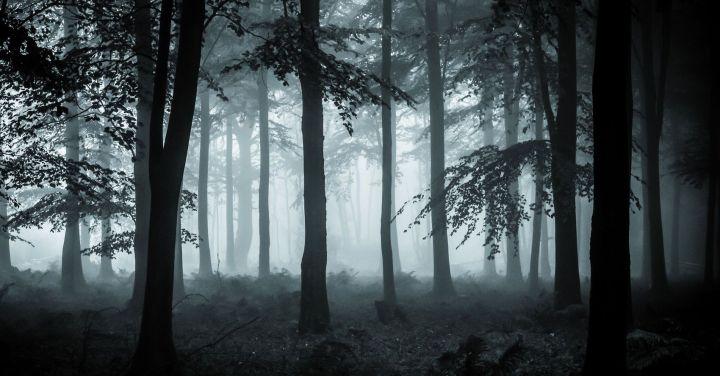 4519132-dark-forest